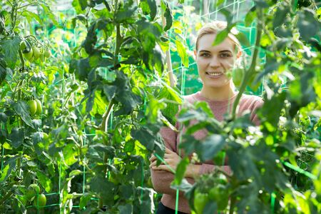 Female owner of plantation supervising growth of tomato plants in greenhouse