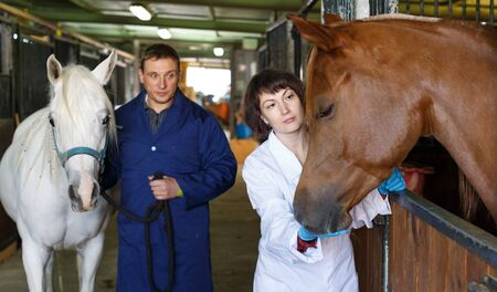 Confident female vet checking horse health at stable