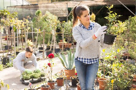 Two gardener are taking care of flowers on their work place in garden
