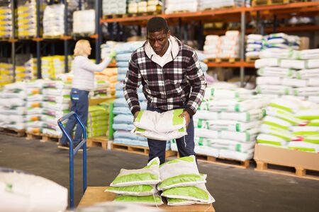 Adult African American man working in fertilizer warehouse, stacking bags on trolley