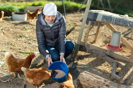 Positive young female farmer working in poultry yard of her smallholding, feeding chickens Reklamní fotografie