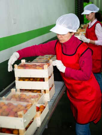 Two female fruit warehouse workers in process of packaging fresh apricots in boxes