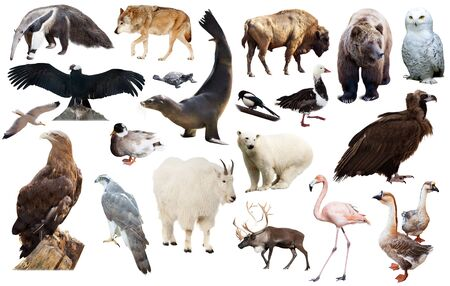 assortment of many north american wild birds and mammal animals isolated on white background Stock Photo