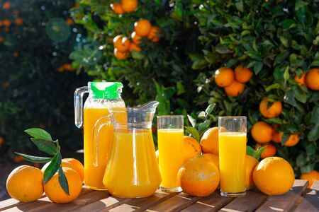 Jug and glasses of freshly squeezed orange juice with oranges in an outdoor setting during summer