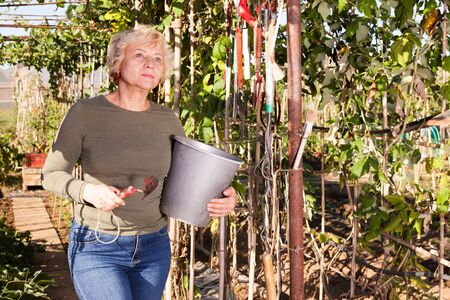 Positive mature woman standing in plantation and holding garden tools