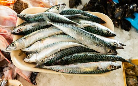 Fresh chilled atlantic mackerel on crushed ice in open showcase of fish store Stock Photo