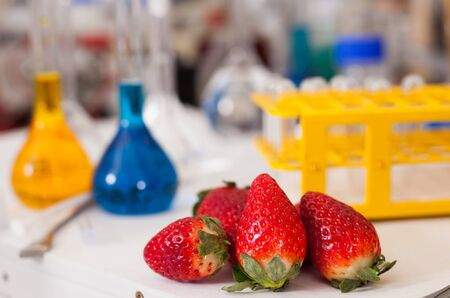 View of fresh ripe strawberry with test tubes and tools on table in research lab. Concept of genetic modification of food
