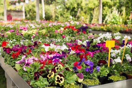 Variété de plantes à fleurs cultivées en serre moderne