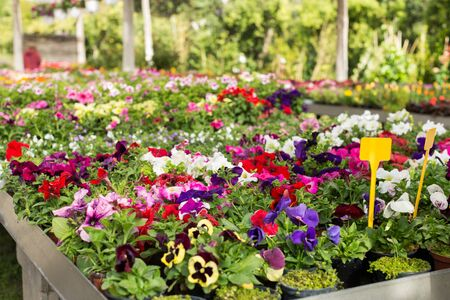 Variety of flowering plants cultivated in modern hothouse