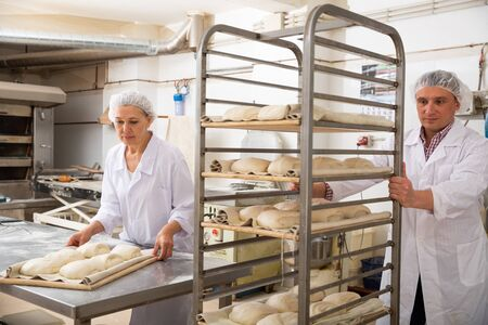 Focused female baker preparing formed dough for proofing while male assistant carrying tray rack trolley with products from raw dough in bakery