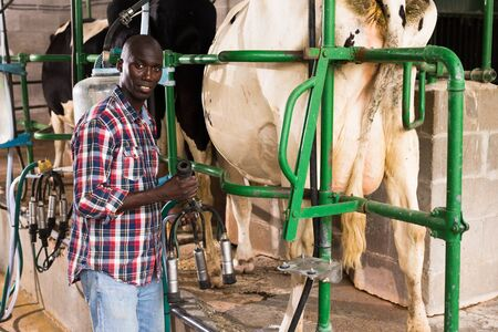 Farmer young man working with automatical cow milking machines