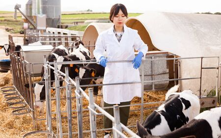 Professional woman worker in white robe taking care of calves at farm