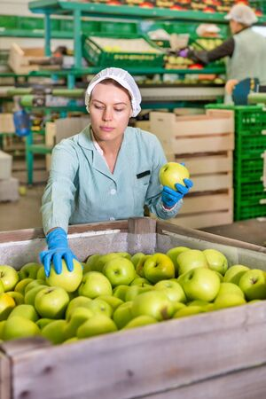 Skilled female employee in uniform inspecting quality of apples in box at a sorting factory