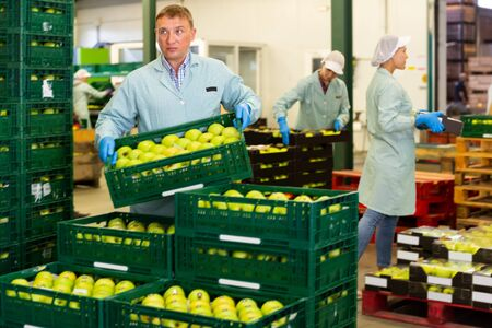 man working on fruit sorting line, carrying box with apples in storage at the apple factory