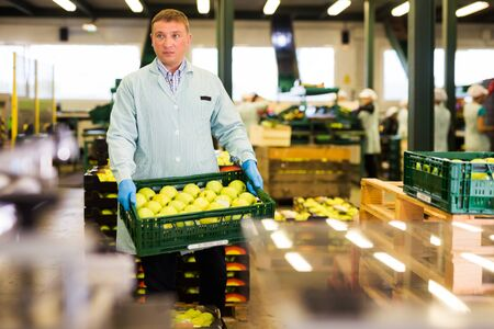 serious man working on sorting line at fruit warehouse, stacking boxes with selected apples