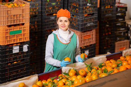 Nice woman in uniform sorts tangerines at store warehouse