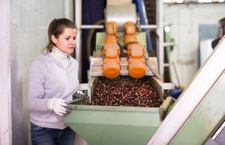 Skilled young woman controlling transfer of olives by conveyor to crushing machine on artisanal factory of olive oil 写真素材