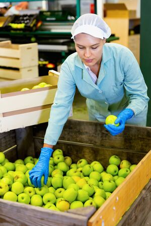 Young diligent positive cheerful woman working at fruit warehouse, checking apples in boxes before storage or delivery to stores