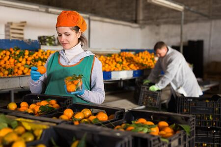 Two cheerful male and female employees controlling quality of ripe tangerines on sorting line 写真素材