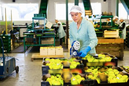 Diligent glad female employee of fruit warehouse in uniform labeling fresh ripe apples in crates