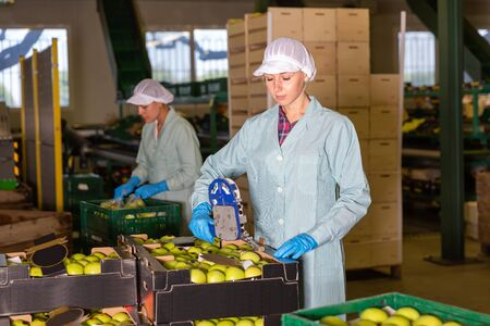 Young female workers in uniform sticking labels on fresh apples at factory