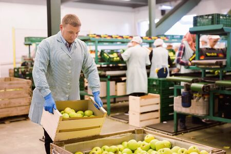 Glad  positive  male employee in blue uniform carrying box with fresh ripe apples selected on sorting line 写真素材