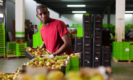 active cheerful Afro workman carrying box with harvested pears in storage at fruit warehouse