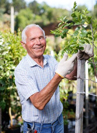 Older man enjoying his favourite pastime of gardening, checking state of fruit trees