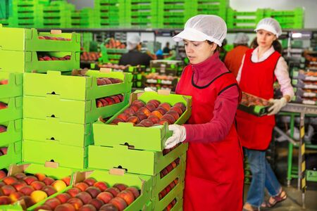 Skilled workwoman engaged on fruit sorting line, carrying plastic box with peaches in the storage Archivio Fotografico