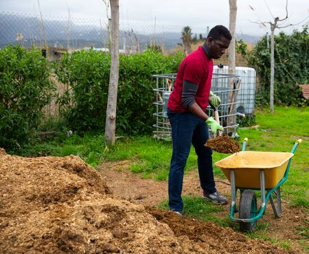 African man working in garden in spring, digging manure to fertilize soil before planting