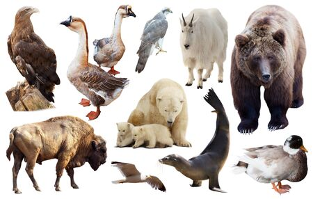 Set of various north american wild animals including birds and mammals isolated on white