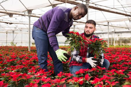 Male florists work in a greenhouse