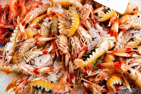 Icy showcase with fresh raw scampi (Norway lobster). Seafood delicacies