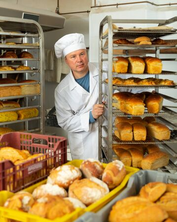 Experienced baker working in small bakery, carrying fresh baked bread on tray rack trolley