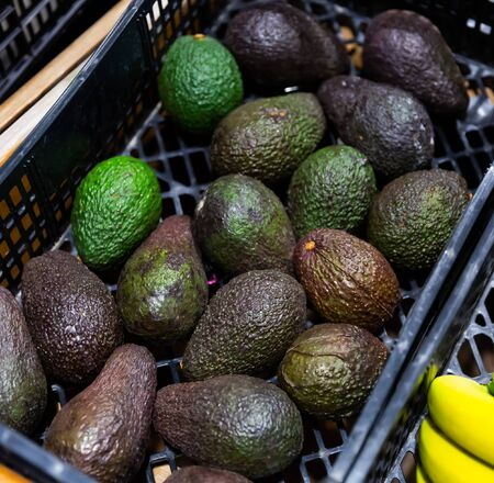 Closeup of Hass avocados with typical dark green colored and bumpy skin on market counter Banco de Imagens