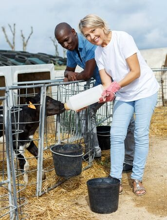 positive senior woman with male assistant feeding calves outdoors
