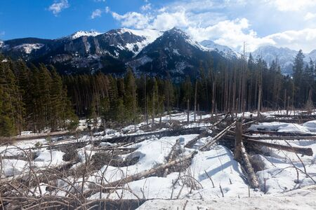 High Tatras  mountains panorama with snow and forest, nobody Standard-Bild