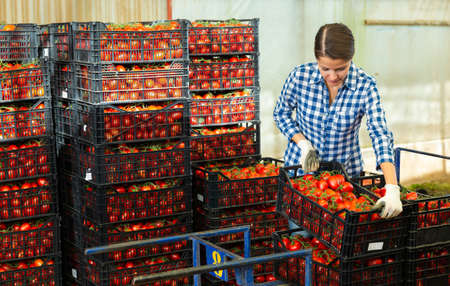 Woman working at vegetable warehouse with tomatoes