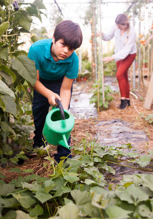 Boy watering different seedlings with watering pot in sunny greenhouse 免版税图像