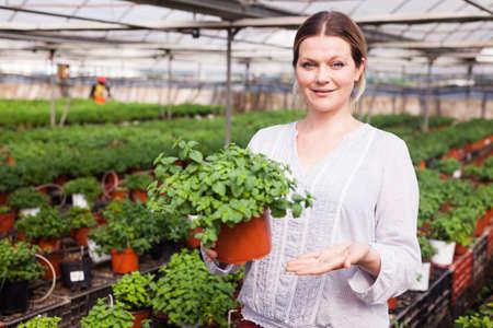 Smiling female gardener holding spearmint seedlings in pot at greenhouse