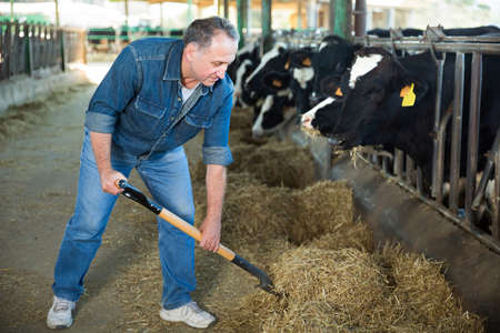 Portrait of man who is feeding cows