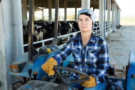 Ordinary woman farmer in the car at the cow farm 版權商用圖片