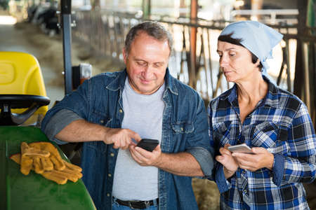 couple adult farmers are standing with phones near cows at the farm