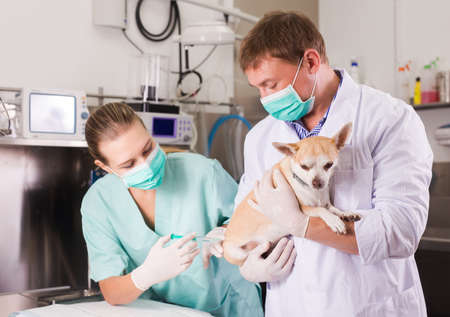 Dog on the operating table in a veterinary clinic 스톡 콘텐츠