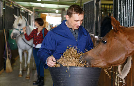 Farm worker feeding horse with hay