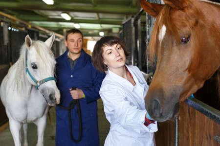 Vet giving medical exam to horse