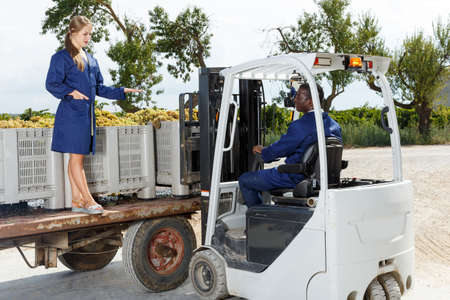 Male and female professional vineyard workers filling truck with fresh harvest of grapes