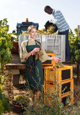 Girl and male vineyard workers inspecting new grapes harvest in boxes