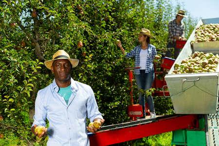 Man picking pears on harvesting platform