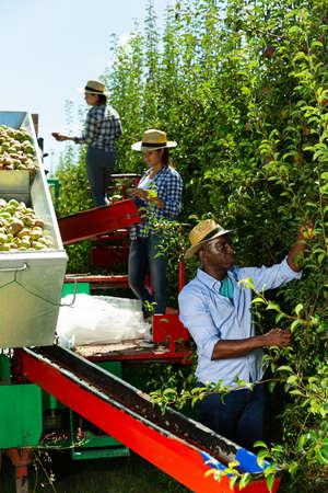Farmers working on harvesting platform in garden